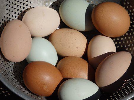 Egg, Easter, Egg Yolk, Cholesterol, Eggshell, Chicken