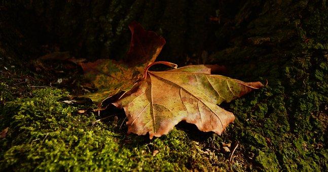 Leaf, Autumn, Light Shadow, Golden Autumn, Fall Foliage