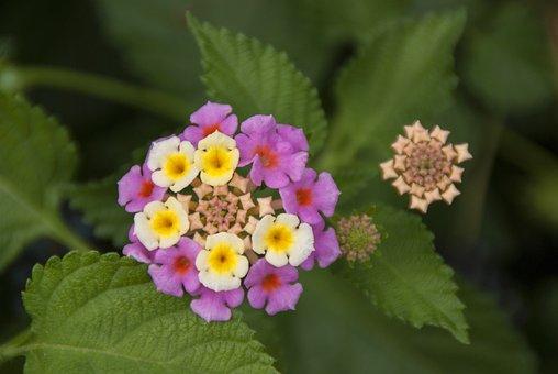 Nature, Flower, Plant, Leaves, Summer, Macro, Garden