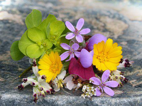 Corsage, Wild Flowers, Small, Flower, Nature, Plant