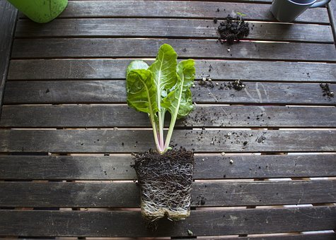 Wood, Leaf, Wooden, Flora, Nature, Garden, Growth
