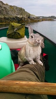 Outdoors, Nature, Water, Rabbit, Canoe