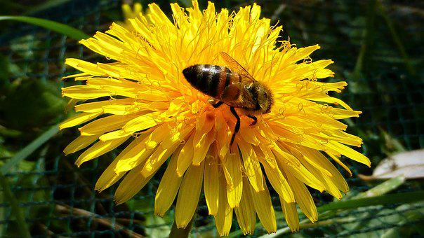 Nature, Flower, Plant, Summer, Bee, Insect, Outdoor