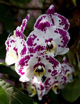 Plant, Flower, Nature, Flowers, Fragility, Petal