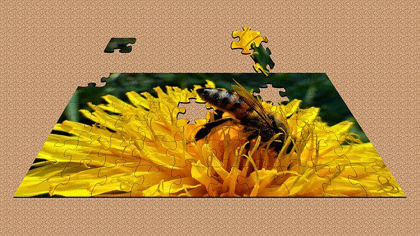 Texture, Puzzle, Wallpaper, Nature, Flower, Insect
