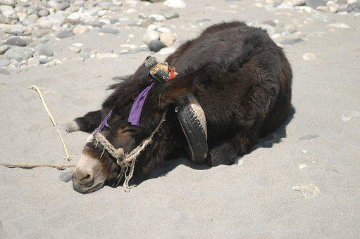 Animal, Tired, Overworked, Rest, Donkey, China