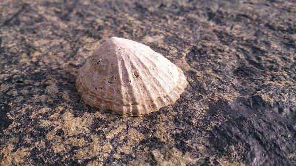 Nature, Sand, Shell, Beach, Seashore, Patella Vulgata