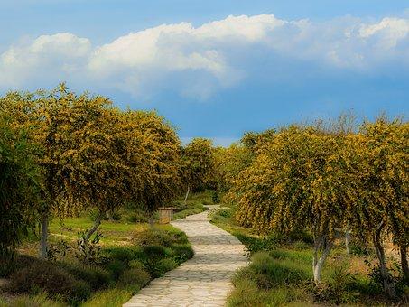 Tree, Landscape, Path, Grove, Spring, Season