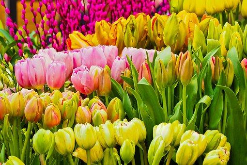 Flowers, Spring, Season, Nature, Spring Flower