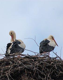 Storks, Bulgaria, Spring, Nest, Pair, Beaks, Plumage