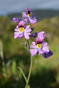 Flower, Nature, Flora, Summer, Garden, Spring Forward