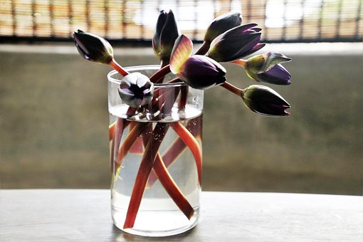 Cup, Water, Flowers, No One, Glass, The Dish