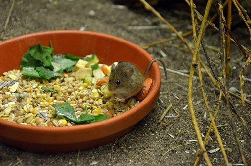 Food, Vegetables, Mouse, Nature, Wood, Leaf, Plant
