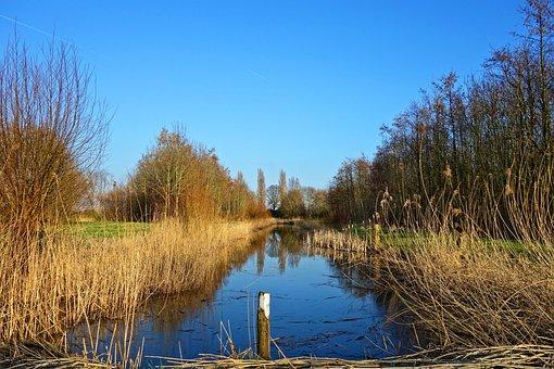 Creek, Water, Waterway, Banks, Reeds, Trees, Post