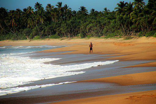 Sand, Jogger, Palm Trees, The Tropical, Beach, Sea Foam