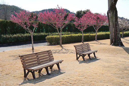Bench, Wood, Natural, Garden, Park, Outdoors, Flowers