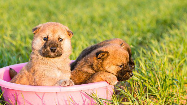 Cute, Little, Animal, Grass, Nature, Mammal, Dog, Young
