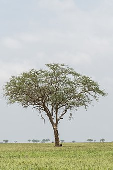 Nature, Tree, Landscape, Grass, Flora, Tsavo East