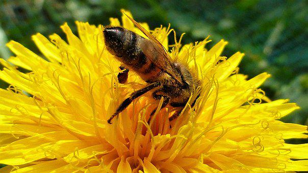 Nature, Flower, Bee, Insect, Summer, Pollination