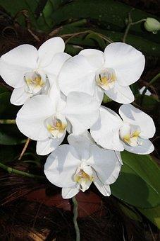 Flower, Plant, Nature, Tropical, Petal, Floral, Garden
