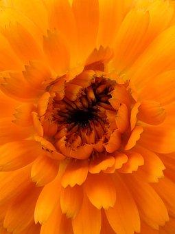 Foreground, Orange Color, Flower, Nature, Plant, Summer