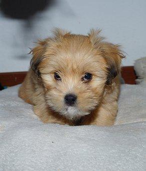 Have Eser, Dog, Pet, Cute, Mammal, Puppy, Nature