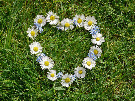 Heart, Flower Heart, Flowers, Spring, Spring Fever