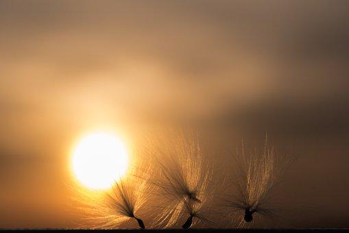 Sunset, Sea, Dawn, Nature, Heaven