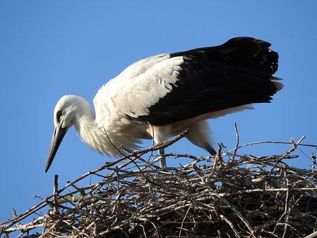 Bird, Wild World, Nature, Animal, Beak, Nest, Stork