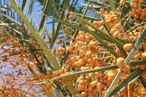 Fruit, Food, Nature, Plant, Tree, Kumquats, Corfu