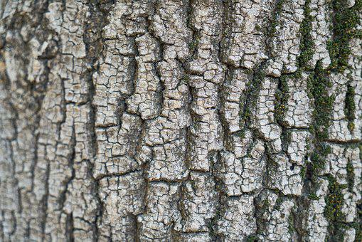 Aba, Surface, Dirty, Tree, Texture, Wood Tissue, Plant