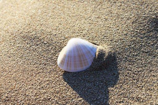 Sand, Beach, Seashore, Shell, Seashell