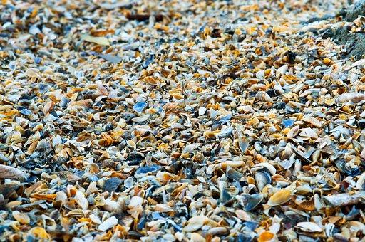 Shell, River, Sand, Sea, Shore, The Coastline Of The