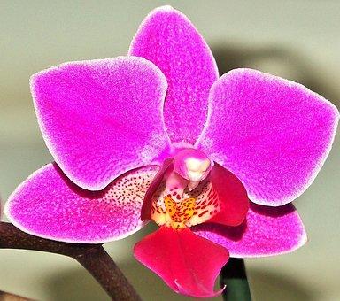 Flower, Plant, Tropical, Nature, Exotic, Orchid, Purple