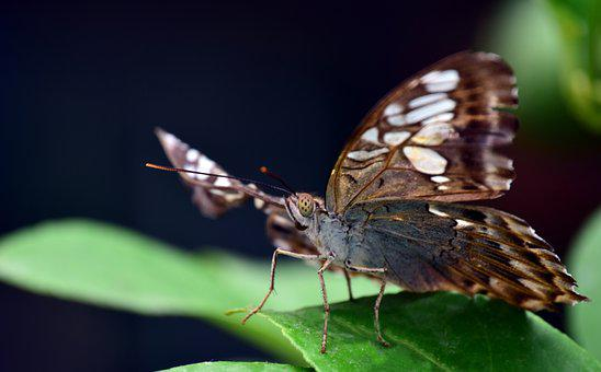 Insect, Butterfly, Nature, Animal World, Animal