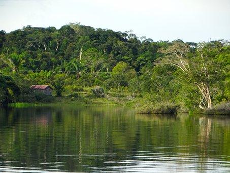 Body Of Water, Nature, Tree, Rio, Wood, Amazon