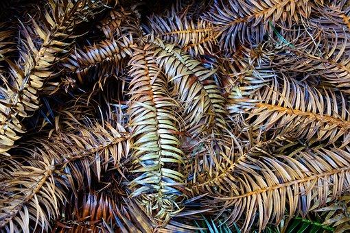 Conifer, Pine, Branch, Needles, Dead Branch, Dead