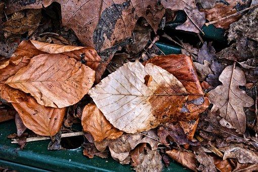 Leaf, Dead Leaf, Brown Leaf, Fallen Leaf, Dried Leaf