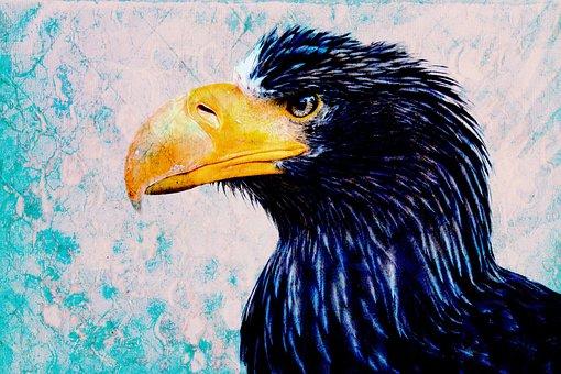 Bird, Wildlife, Portrait, Nature, Animal, Eagle