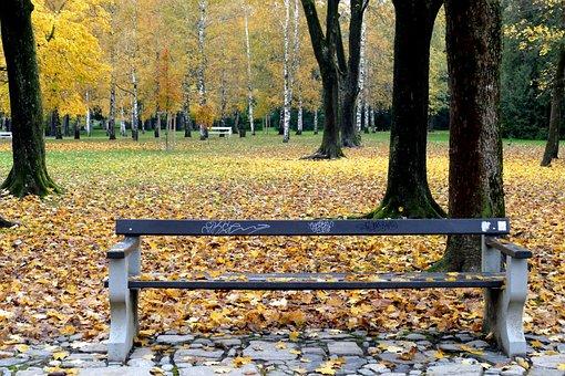 Fall, Wood, Bench, Tree, Park