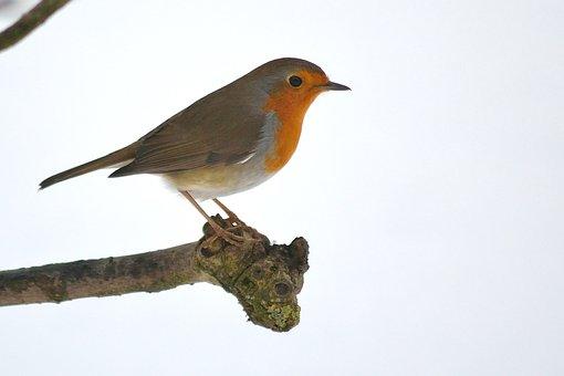 Bird, Animal World, Nature, Small, Wild, Feather