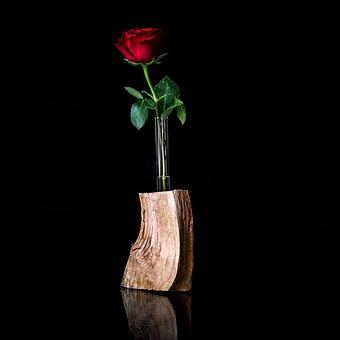 Flower, Vase, Leaf, Still Life, Shell, Rose, Plant, Bud