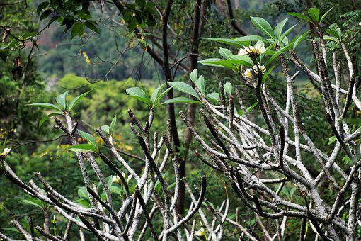 Exotic, Flowers, Nature, Tree, Leaf, Plant
