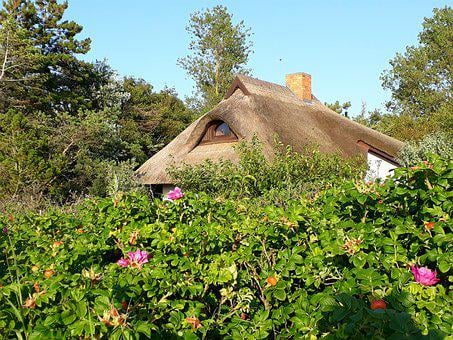 Thatched Roof, House, Roof, Heck Roses, Reed, Hedge
