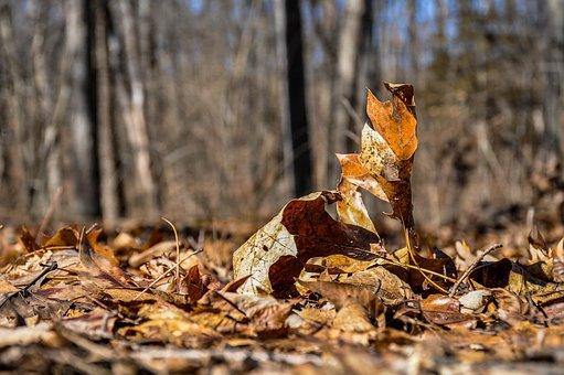 Nature, Wood, Tree, Fall, Outdoors, Leaf, Environment