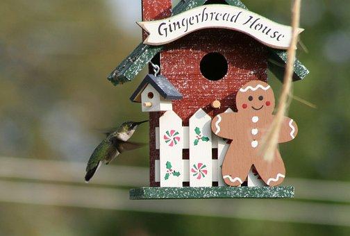 Birdhouse, Bird, Little, Animal, Outdoors, Nature, Fun