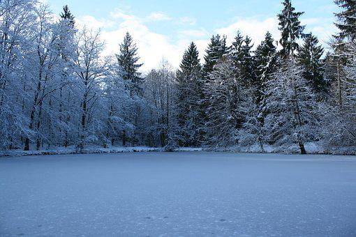 Snow, Winter, Frost, Wood, Cold, Nature, Ice, Landscape