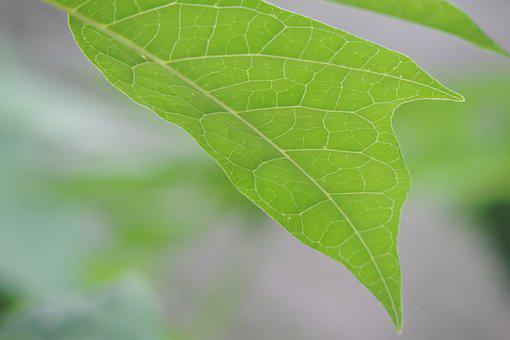 Leaf, Nature, Plant, No Person, Lush, Ecology