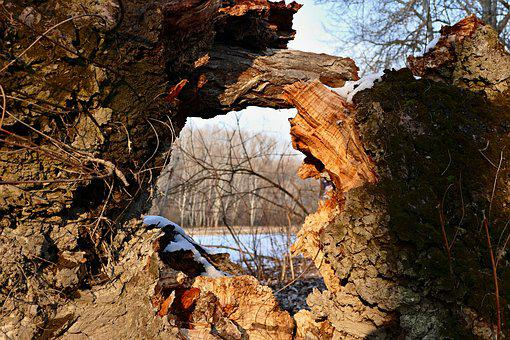 Forest, Nature, Winter, Old, Tree, The Hole, Bark, Moss