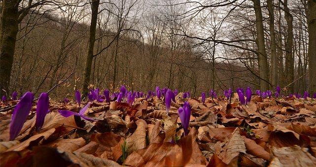 Nature, Season, Flower, Flora, Leaf, Outdoors, Wood
